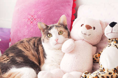 Cat and the peluche Stock Photo