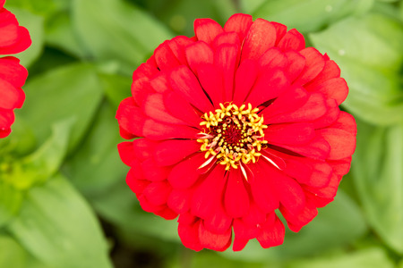 Red flower with yellow centre stock photo picture and royalty free red flower with yellow centre stock photo 83335404 mightylinksfo