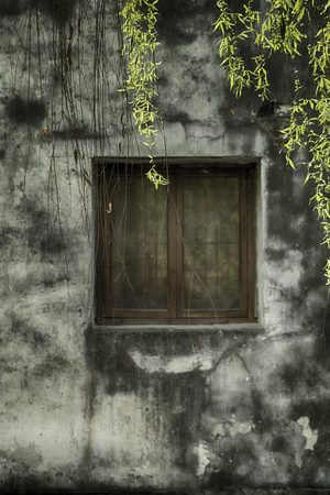 window with overhanging leaves 版權商用圖片