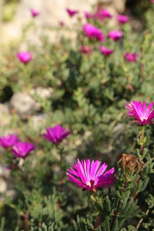 Violet colored plant with long petals