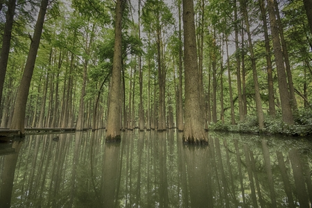 canopy of a forest on water Imagens