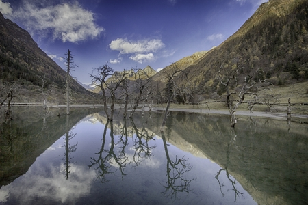 still lake in a valley with withered trees