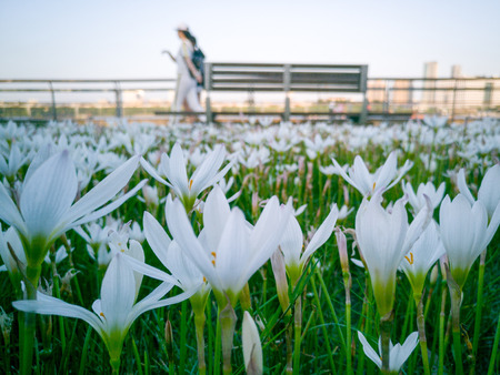 close up of lilies in a city park as people stroll by Imagens - 86051361