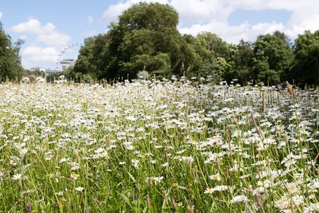 flower meadows at the park Imagens