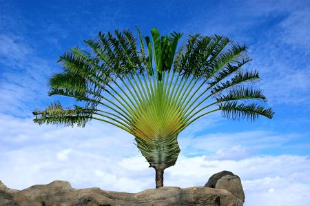 Palm on a ctone island Stock Photo - 5290976