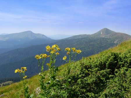 conglomeration: Yellow flowers at the wild mountains