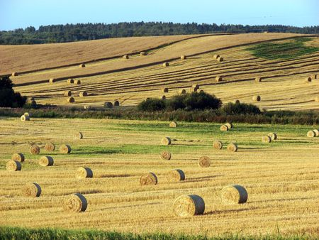 Straw bales on field and hill Stock Photo - 5321304