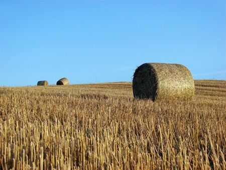 Straw bales on field and hill   photo