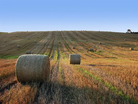 Straw bales on field and hill Stock Photo - 5321307