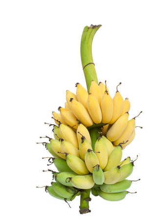 A bunch of ripe and ripening bananas isolated on white background.