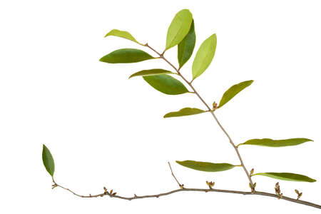 parasitic: Parasitic plant Stock Photo