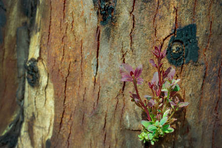 renewal: Tree grow on burnt stump background,  development and renewal as a business concept