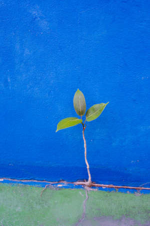 persistence: Green tree growth from blue concrete wall, persistence of survival Stock Photo