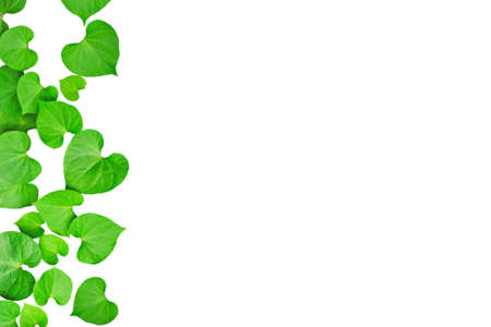 Natural heart-shaped green leaves, soft focus on white background as picture frame