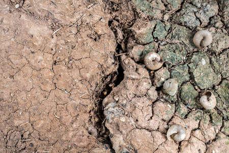 environmen: Shells on drought land background