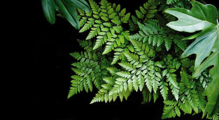 Green leaves on black background, soft focus, tropical forest concept Banque d'images