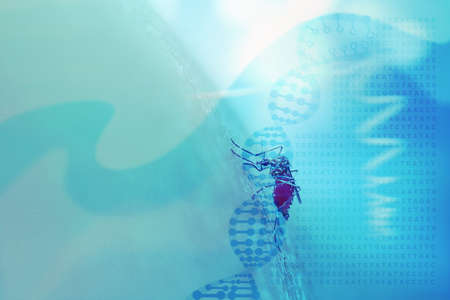 nile: Abstract medical background with DNA helix, genetic code and mosquito sucking human blood. Concept for mosquito genetic and gene editing technology (CRISPR-Cas9) to control mosquito populations. Stock Photo