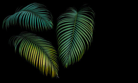 Green and yellow palm leaves, tropical plant growing in wild isolated on black background.