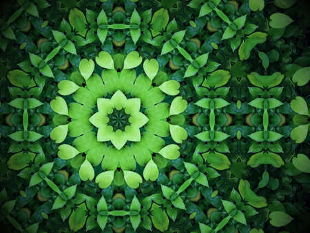 Abstract greenery background, heart shaped green leaves with kaleidoscope effect Stock Photo
