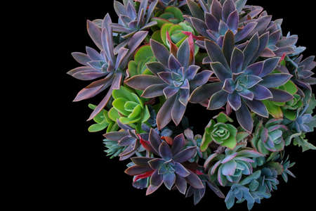 types of cactus: Top view of multiple types succulent plants on black background.