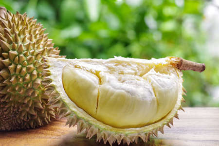 Custardy pale yellow flesh inside spiky husk of durian the popular fruit with strong odour native in Southeast Asia on wood table with green bokeh blurred background.