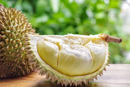 Custardy bleekgeel vlees binnen stekelige schil van durian het populaire fruit met sterke geur inwoner in Zuidoost-Azië op houten lijst met groene bokeh vage achtergrond.
