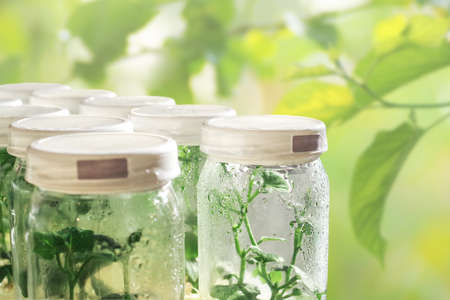 Plant tissue culture growing in laboratory bottles on green leaves blurred background for biotechnology and agriculture background.