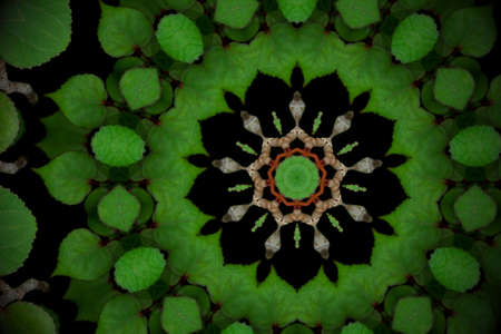Abstract greenery background, heart shaped green leaves of sea hibiscus on black with kaleidoscope effect.
