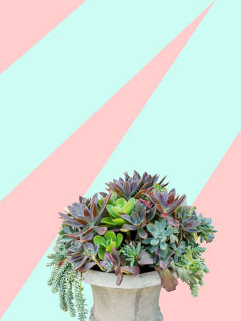 types of cactus: succulent plants arrangement in concrete planter on trendy pastel background, clipping path included.