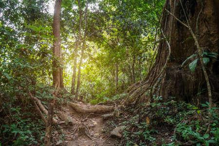 熱帯熱帯雨林の背景のジャングルのパス。