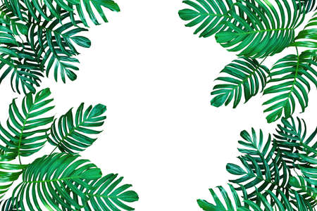 Tropical leaf nature frame layout, Monstera philodendron the evergreen vines plant on white with copy space for tropical background. 版權商用圖片 - 90850040
