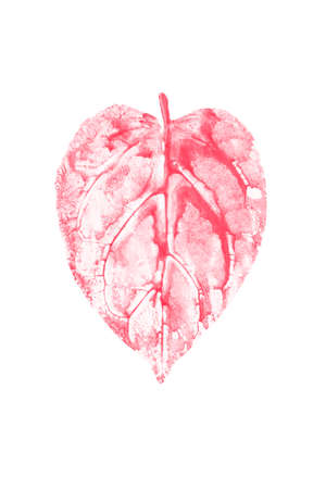 Watercolor leaf printed, heart shaped red leaf on white background for love and Valentines day  concepts. Clipping path included. Stock Photo