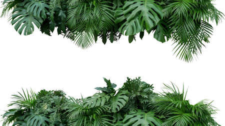 Tropical leaves foliage plant bush floral arrangement nature backdrop isolated on white background, clipping path included. Stock fotó