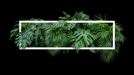 Tropical leaves foliage jungle plant bush nature backdrop with white frame on black background. Stockfoto