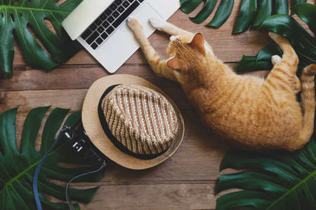 Domestic ginger cat acts as human working on laptop computer on rustic wood grunge background with tropical leaves Monstera, hat and retro style camera, freelance work and digital nomad concepts.