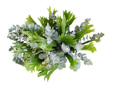 Bunch of climbing bird's nest fern and Silver Drop eucalyptus leaves, tropical foliages plant flower bouquet floral arrangement isolated on white background, clipping path included.