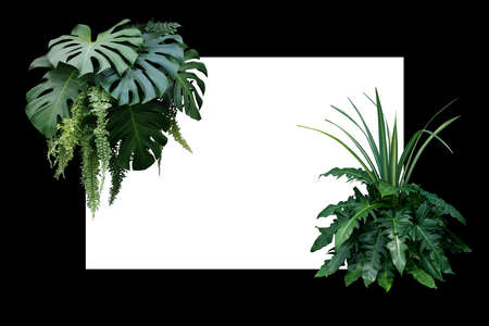 Tropical leaves nature border, foliage plant bush (Monstera, fern, philodendron and dracaena)  floral arrangment on white and black frame background. 스톡 콘텐츠