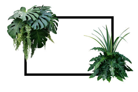 Tropical leaves nature border, foliage plant bush (Monstera, fern, philodendron and dracaena)  floral arrangment on white background with black frame. 스톡 콘텐츠