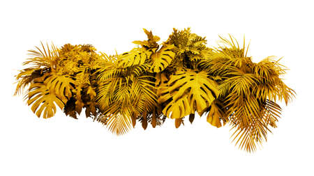 Golden leaves tropical foliage plant bush floral arrangement gold nature new year backdrop isolated on white background, clipping path included.