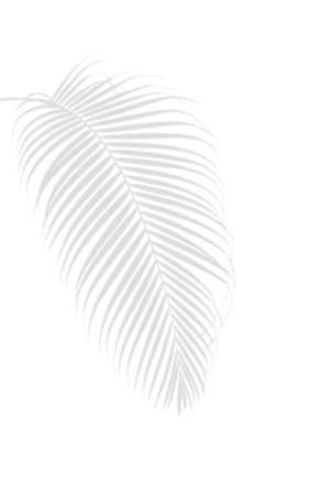 Palm leaf shadow on white, abstract nature tropical summer background.
