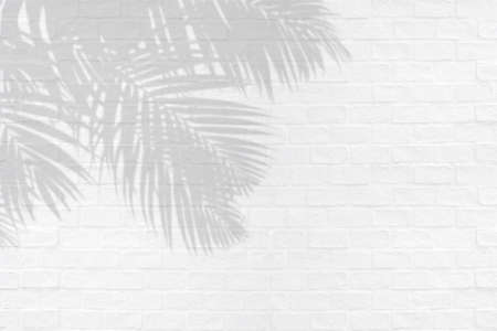 Tropical palm leaves shadows on white brick wall texture background.