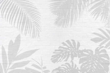 Monstera, palm and other tropical leaves foliage plant shadows on white brick wall texture  background. 스톡 콘텐츠