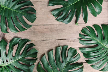 Flat lay creative frame of tropical nature leaves Monstera on rustic wood grunge background. 스톡 콘텐츠