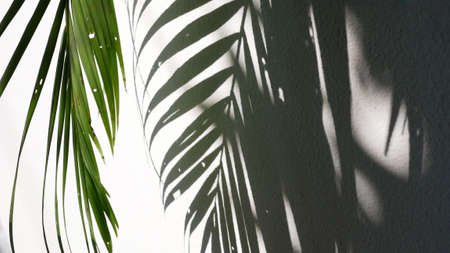 Tropical palm leaves with shadows on white concrete wall abstract blurred background. 스톡 콘텐츠