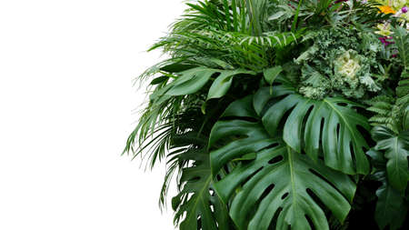 Monstera and tropical leaves foliage plant bush floral arrangement nature backdrop isolated on white background, clipping path included. Stok Fotoğraf