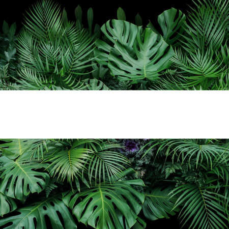 Monstera, fern, and palm leaves tropical foliage plants bush nature backdrop with white frame lay out on dark background.