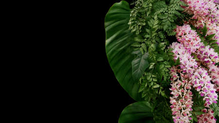 Tropical fern and philodendron foliage plant leaves with beautiful foxtail orchid exotic flowers (Rhynchostylis gigantea), floral arrangement nature backdrop on black background. Banco de Imagens