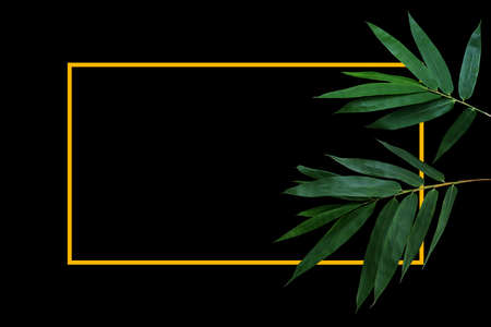 Dark green leaves of bamboo forest plant on black background with gold yellow border frame layout.