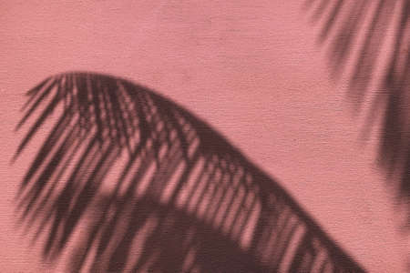 Palm leaves shadow on neon pink color painted concrete wall texture summer background.