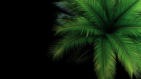 Green leaves of Japanese Sago palm tree the foliage cycad palm plant on black background, top view. Banco de Imagens